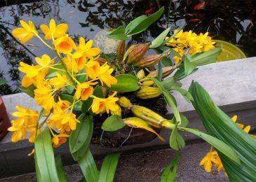 cách trồng và chăm sóc hoa lan thủy tiên