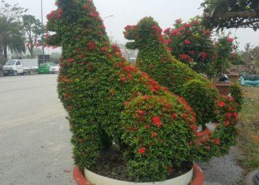 Cách chăm sóc cây hoa mẫu đơn- Tâm linh