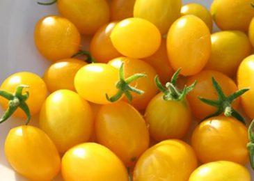 cà chua bi vàng đẹp mắt