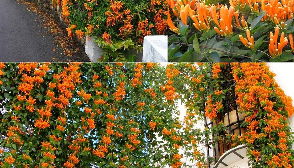 những khu vườn hoa leo rạng đông đẹp