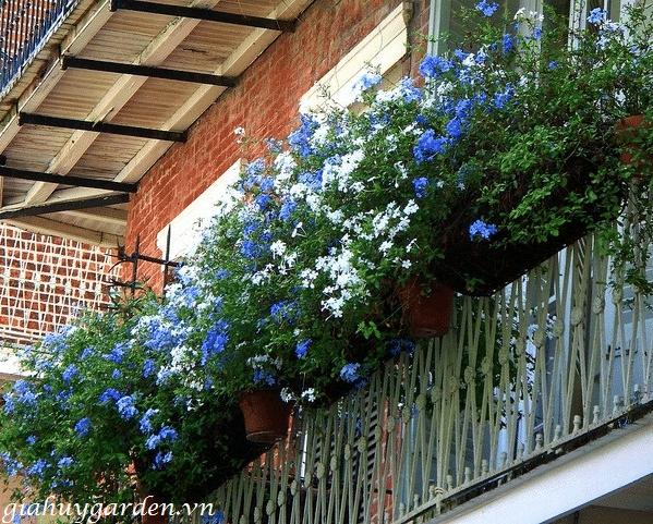 vườn hoa thanh xà