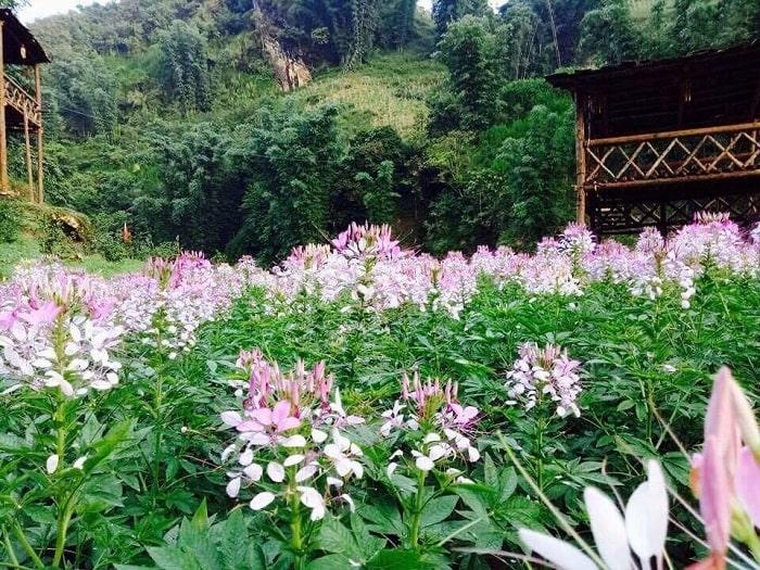 những nơi có thể trồng được hoa hồng ri