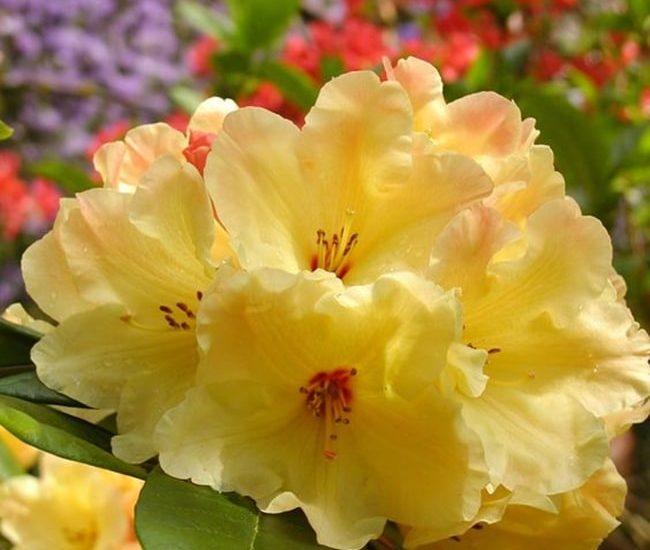 Những bông hoa phơn phớt vàng cũng khiến ta xao xuyến.