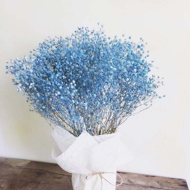 bó hoa baby khô màu đẹp