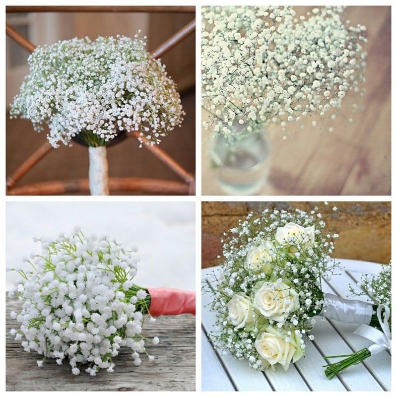 hoa baby trắng trinh khôi