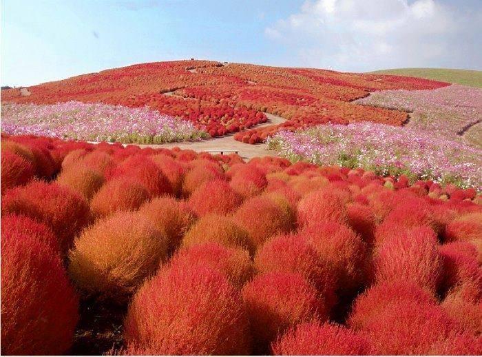 Cách trồng và chăm sóc cỏ đổi màu