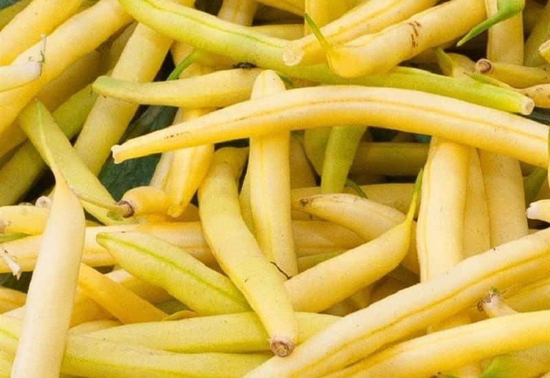 cây đậu cove vàng nhiều quả