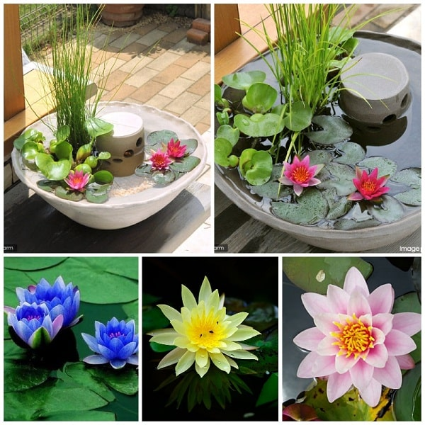Gieo trồng hoa