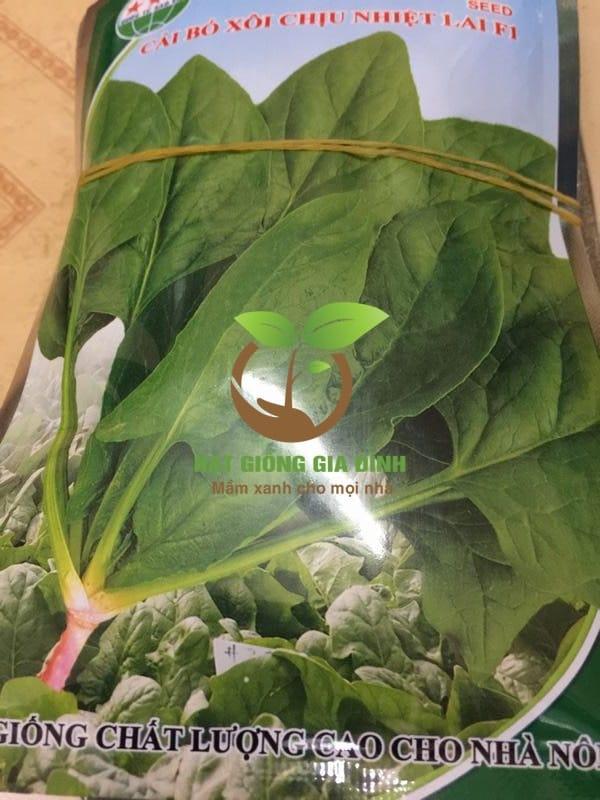 Thời vụ trồng rau cải bó xôi cho năng xuất cao