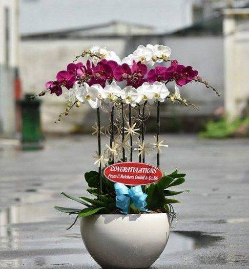 Giới thiệu Shop bán hoa lan hồ điệp ở TpHCM