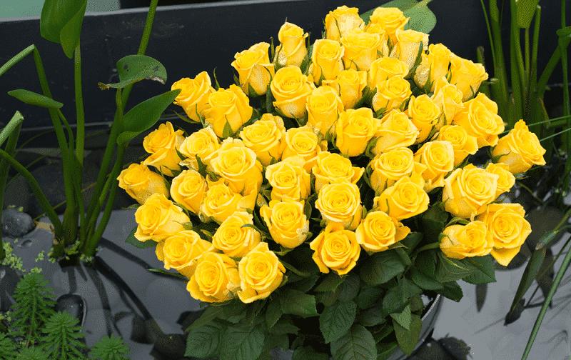 Hoa hồng vàng tặng thầy cô giáo: