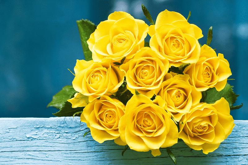 Hoa hồng vàng tặng Bạn bè hoặc đồng nghiệp