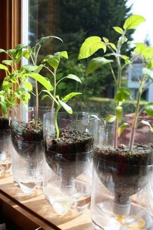 cố định chai nhựa và nguần nước ổn định cho cây phát triển