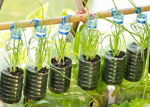 cố định chai nhựa để trồng rau