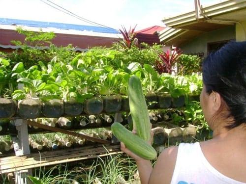 cho thu hoạch quanh năm nhờ ý tưởng trồng rau từ chai nhựa
