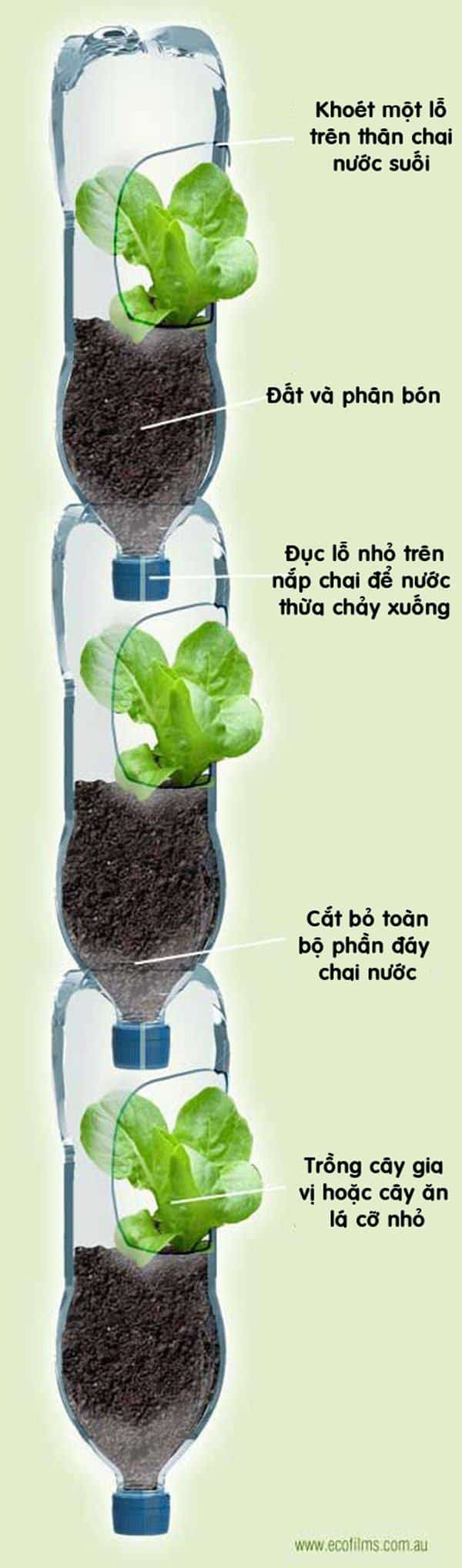 cải tiến cách trồng rau từ chai nhựa