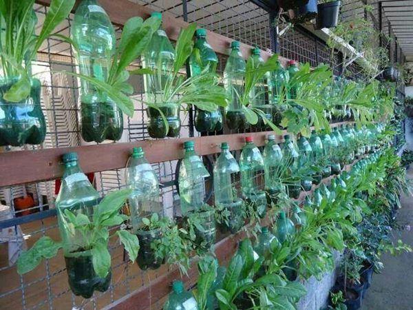 trồng rau từ chau nhựa thông minh
