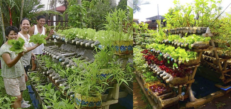 không gian vườn rau sạch được trồng bằng vỏ chai nhựa