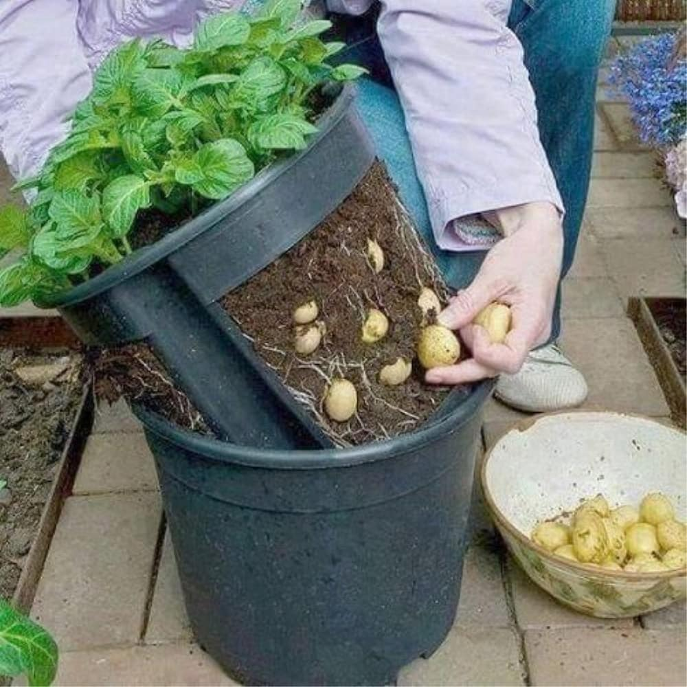 trồng rau xanh tốt cho thu hoạch lâu dài từ chai nhựa và chậu nhựa