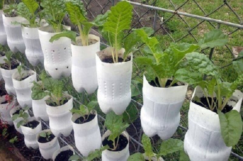 những chai nước bỏ đi được trồng thành những cây xanh tốt