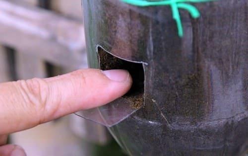 đục thành những lỗ nhỏ để bỏ hạt rau vào
