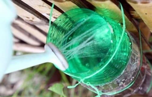 tưới nước cho cây phát triển