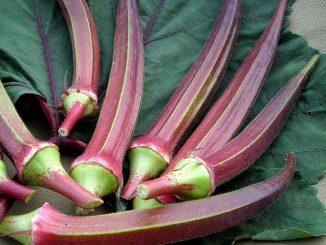 Cách trồng và chăm sóc cây đậu bắp 2