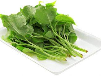 Cách trồng rau lang ăn lá với ngọn cả cả năm 1